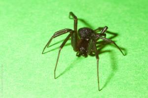 Пушистое брюшко - макросъёмка пауков