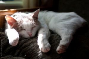 Тихий час по кошачьи
